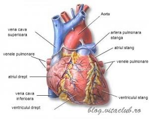 boli cardiovasculare inima