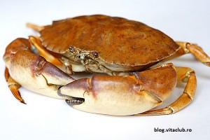 colagen de la crabi- colagenaza- ajuta la refacerea tesuturilor pielii