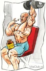 eficienta suplimentelor cu ATP asupra fortei si masei musculare la culturisti