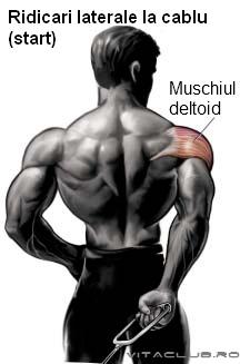 exercitii pentru dezvoltarea musculaturii umerilor