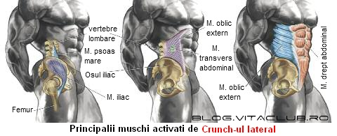 grupe musculare si muschi abdomen