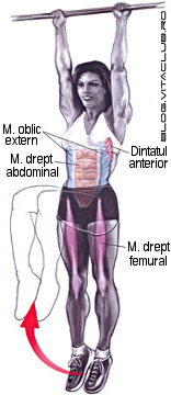 ridicarea genunchilor la piept din atarnat este un exercitiu pentru muschii abdomenului