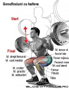 exercitii pentru picioare cu genuflexiuni cu haltera pe spate