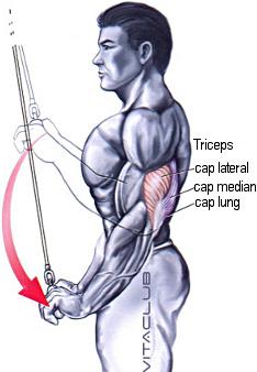 extensiile la helcometru cu bara dreapta este un exercitiu pentru muschiul triceps
