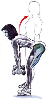 indreptarile cu picioarele drepte cu gantere sunt un exercitiu pentru muschii femurali ai coapsei