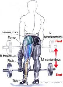 indreptarile cu picioarele drepte cu haltera sunt un exercitiu pentru muschii femurali