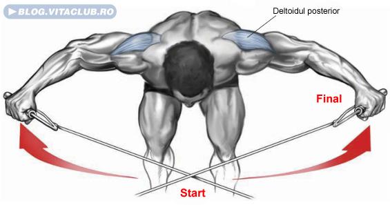 exercitii pentru umeri ce permit izolarea deltoidului superior