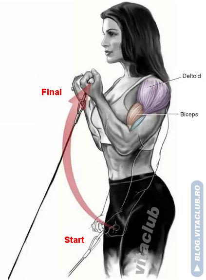 flexii pentru muschiul biceps la cablu