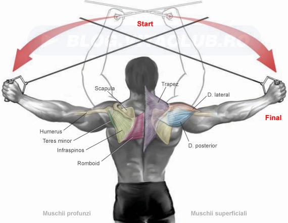 exercitii la helcometru pentru muschiul deltoid posterior