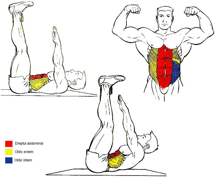 exercitii abdomen