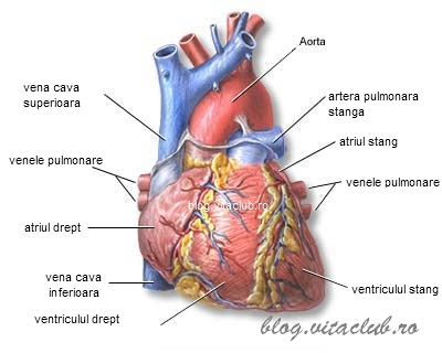 tratament boli cardiovasculare