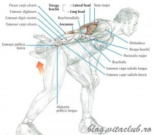 extensii triceps