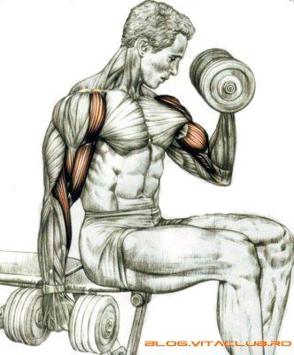 exercitii pentru biceps gantere