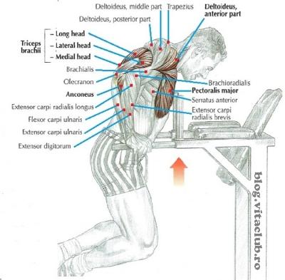 care e cel mai bun exercitiu pentru triceps