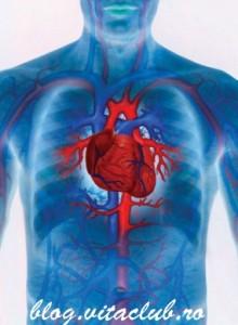 afectiuni si boli ale sistemului cardio-vascular