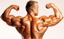 exercitiile cu multe repetari si masa musculara spate culturism