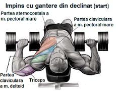 exercitii pentru piept-impins cu gantere pe plan declinat-start-culturism-fitness
