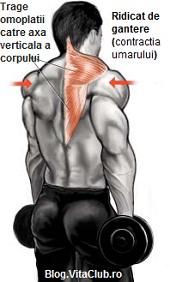 exercitii trapez-ridicat de gantere-contractia umarului-culturism fitness