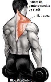 exercitii trapez-ridicat de gantere-pozitia de start culturism fitness masa musculara