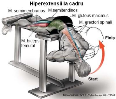 exercitii pentru lombari spate