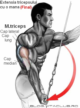 exercitii pentru brate musculoase si mari