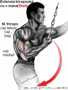 exercitii la cabluri pentru tricepsi mari