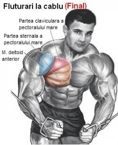 exercitii pentru partea mediana a pieptului