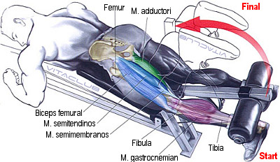 flexia gambei pe coapsa la aparat este un exercitiu pentru bicepsul femural
