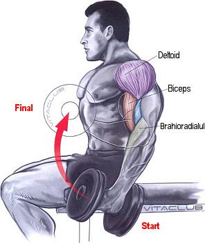 flexii alternative cu gantere pentru muschiul biceps