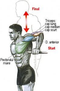 flotarile la paralele sunt un exercitiu pentru cresterea masei musculare a tricepsului