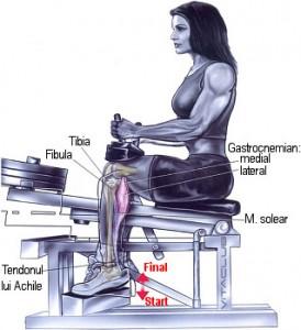 ridicarile pe varfuri la aparat este un exercitiu de baza pentru gambe