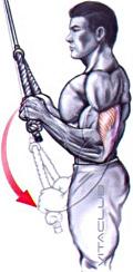 extensii la helcometru cu sfoara pentru muschiul triceps