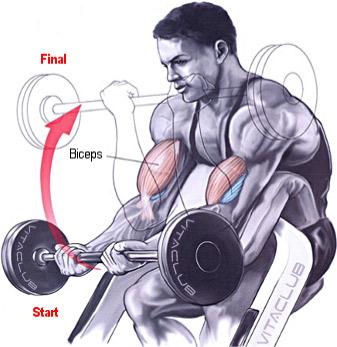 flexii pentru biceps cu haltera la banca Larry Scott