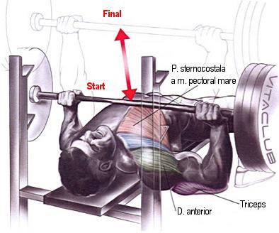 impins de la la piept cu haltera din culcat orizontal este un exercitiu de baza pentru muschii pieptului