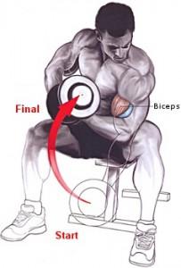 Flexiile concentrate cu gantera sunt un exercitiu pentru muschiul biceps brahial