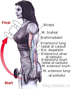 flexiile hammer ( ciocane ) sunt un exercitiu pentru brahiali si pentru biceps