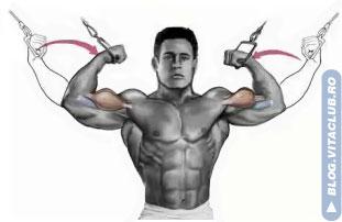 flexia bratelor la helcometru e un exercitiu pentru biceps