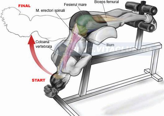 exercitii pentru muschii lombari ai spatelui inferior
