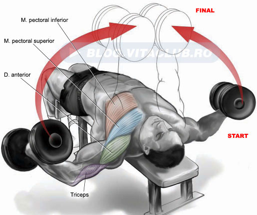 exercitii pentru zona inferioara a pieptului (pectoralul mare)